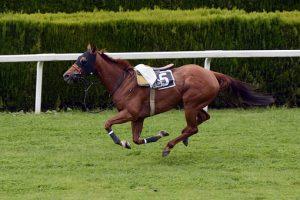 horse-racing-1577287__340